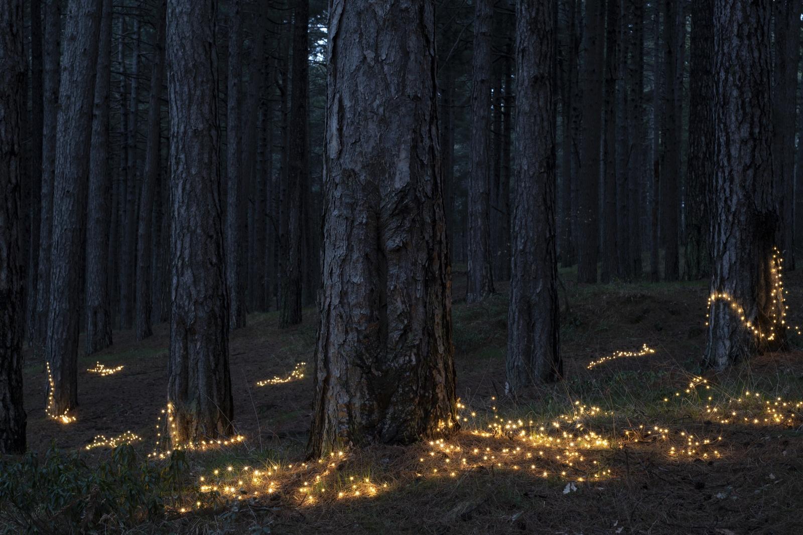 Fireflies, 2020