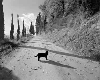 Le chat noir, 2010