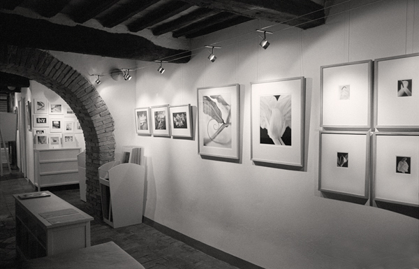 """Gallery during the exhibition """"Fleurs"""""""