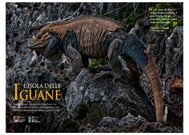 Oasis / L'Isola delle Iguane
