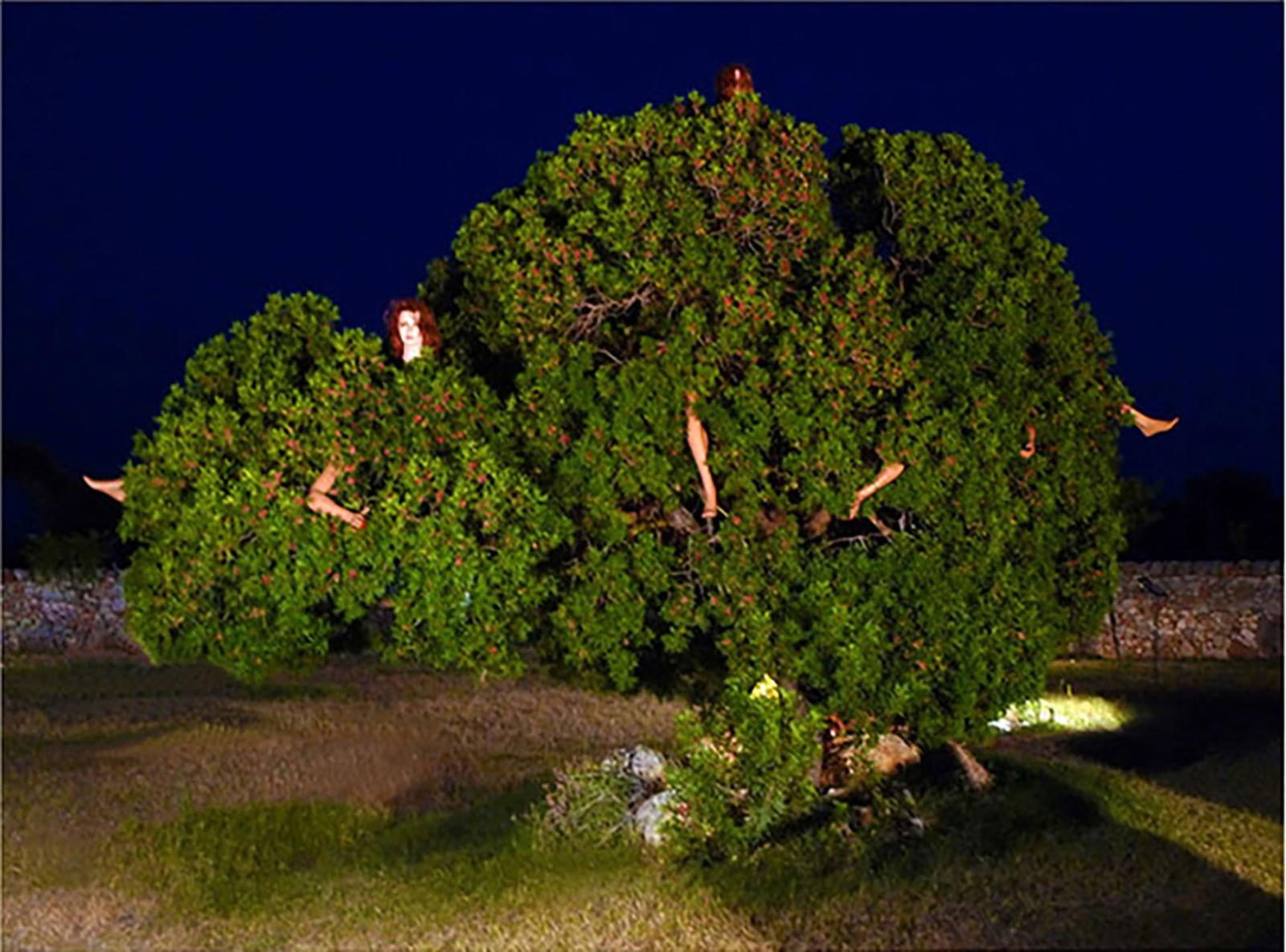 ALBERO ABITATO . 2010 - Installazione con albero e manichini Masseria Boezio (Ostuni), estate 2010