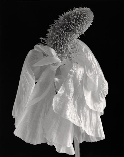Madame fleur, 2004