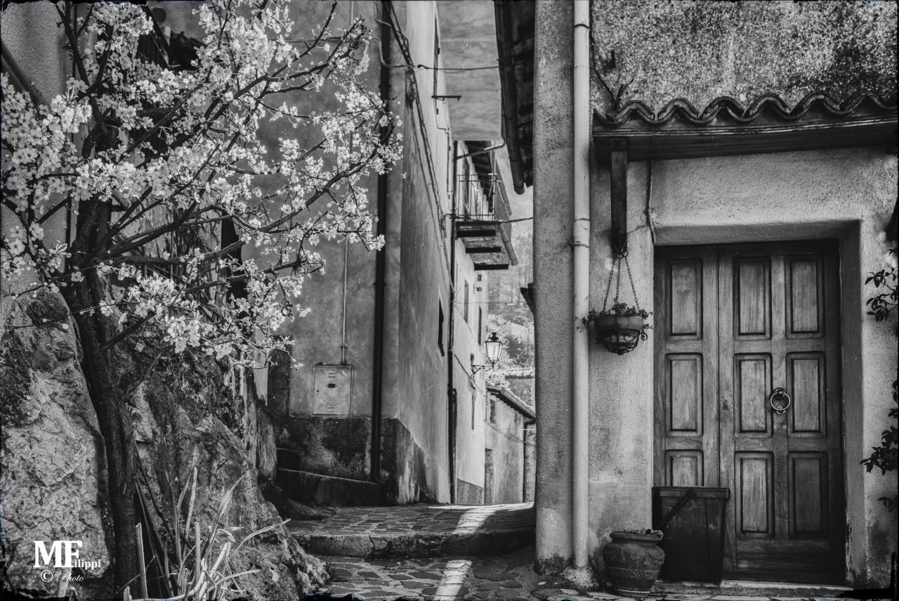 © Massimiliano Filippi - massimilianofilippi.it